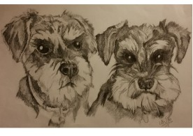 1st Dog Portrait Ever! 2 Mini Shnauzers